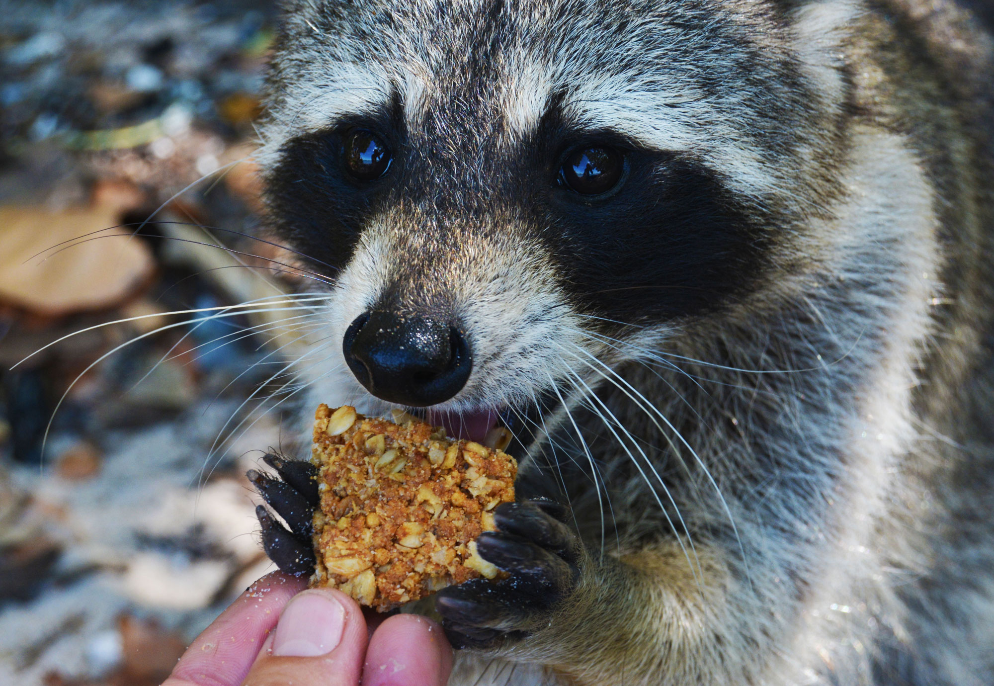 Photo for: Forest Preserve Formalizes Ban on Feeding Wildlife