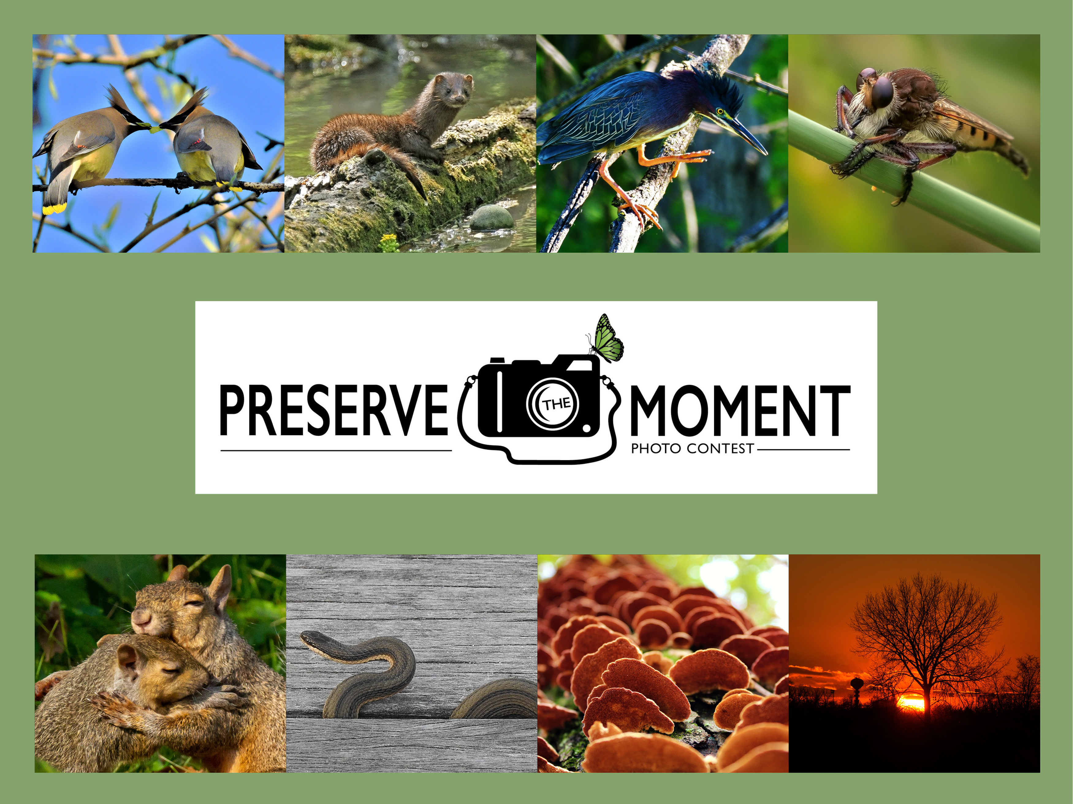 Photo for: Preserve The Moment Photo Contest Returns for 2019