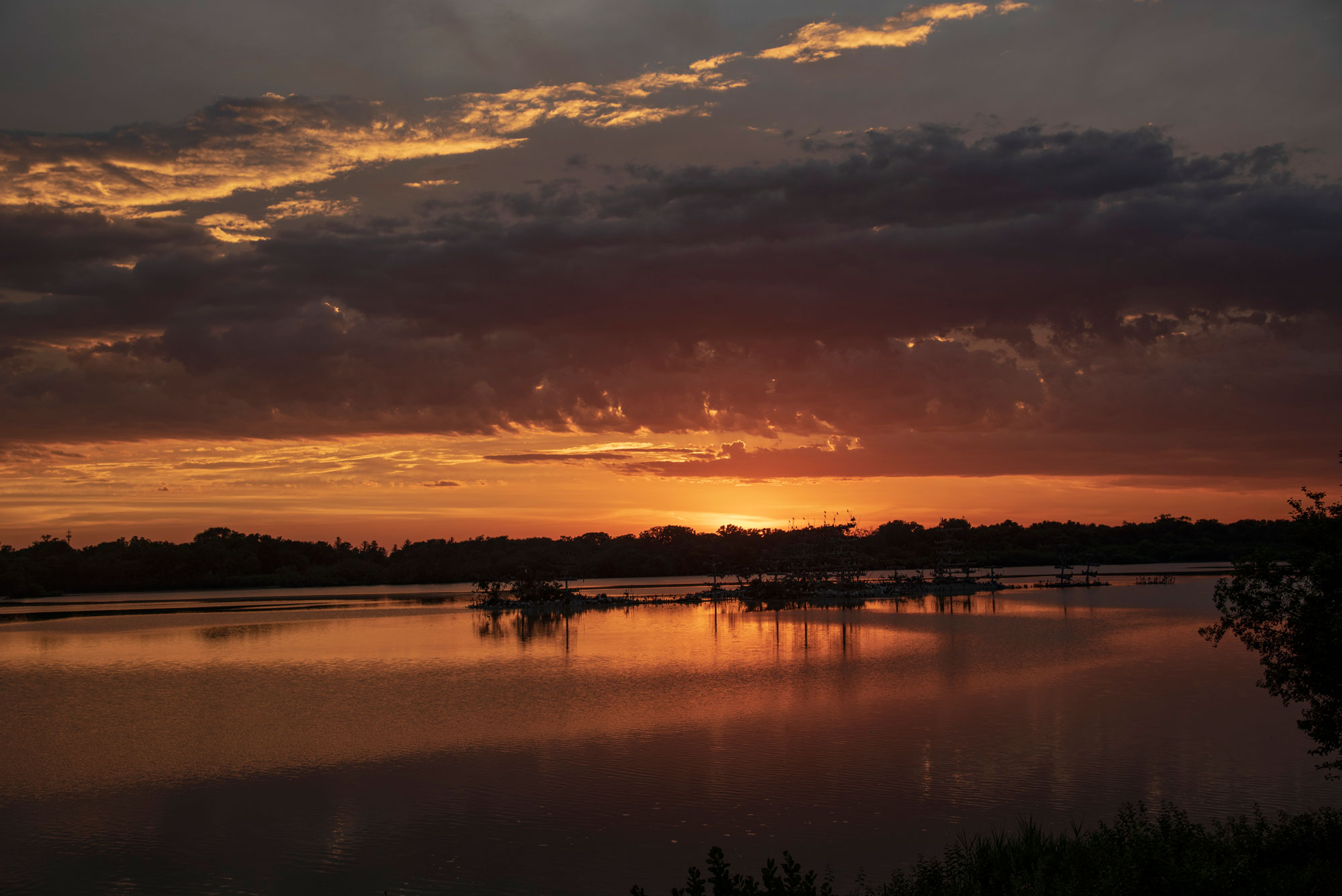 Photo for: Lake Renwick Heron Rookery Reopens August 16 for General Use