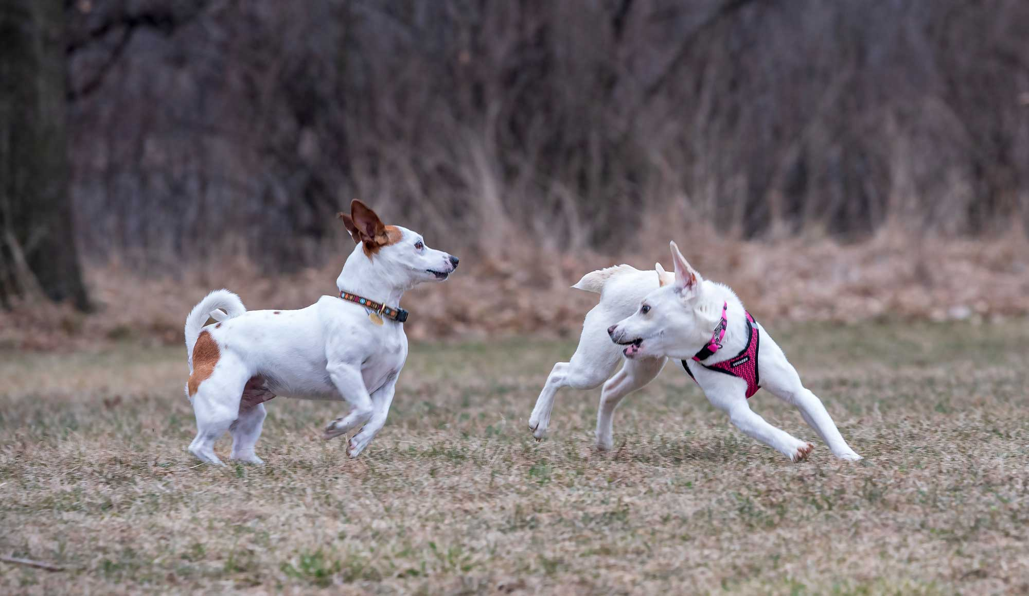 Photo for: Discounted Dog Park Permits Now On Sale