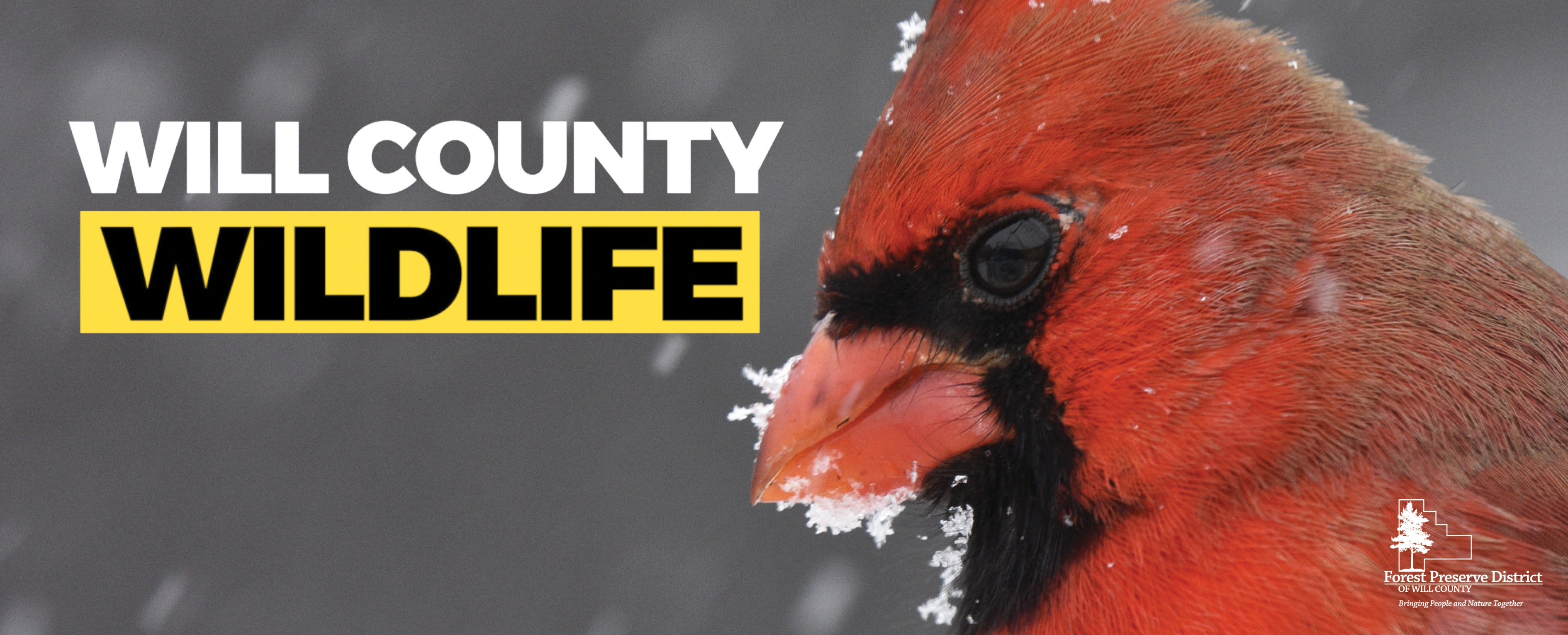 Photo for: Join Our Will County Wildlife Facebook Group