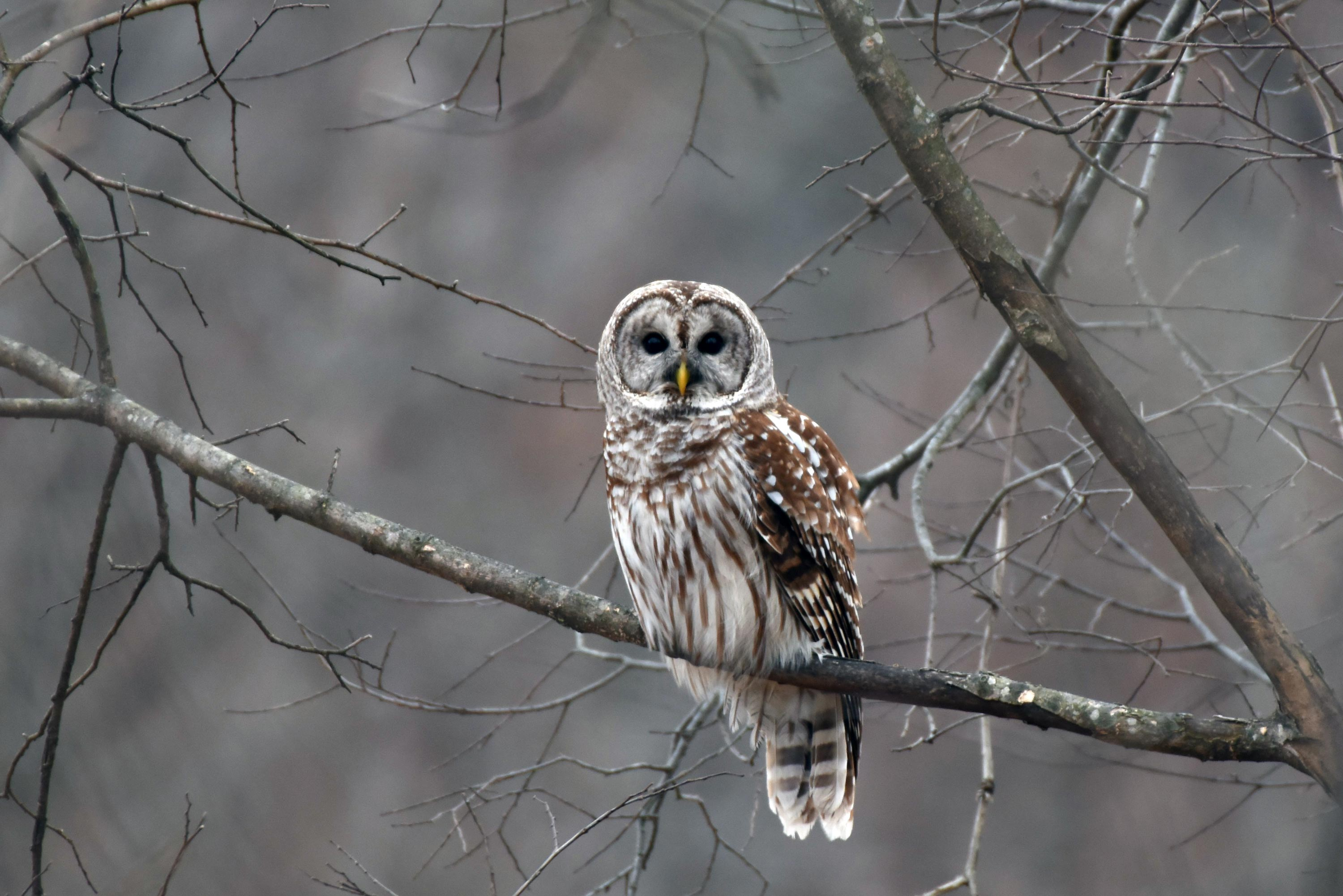 The Owls of Will County - Forest Preserve District of Will