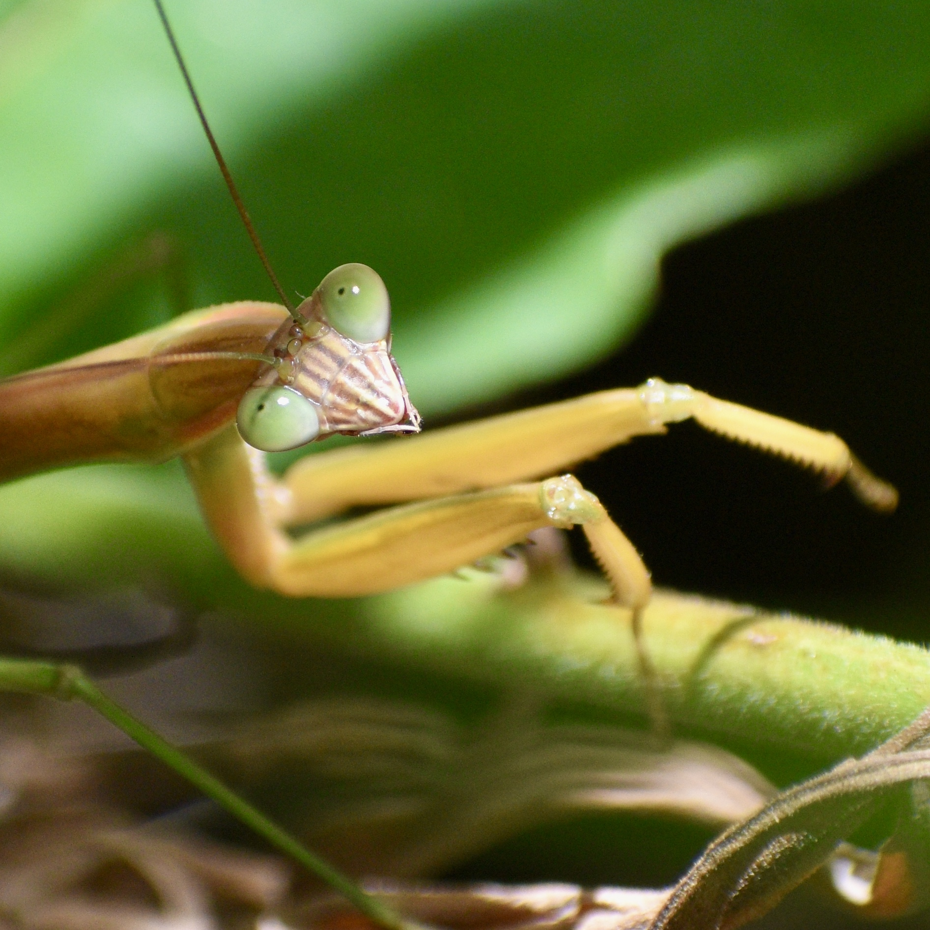 Photo for: Strike a Pose: Praying Mantis Close-Up Captures Photo Contest Win