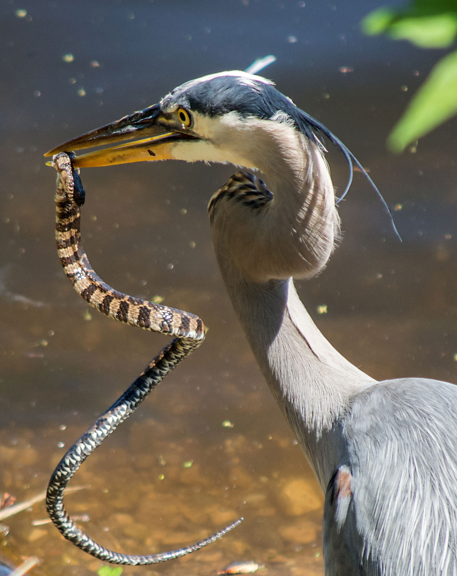Photo for: Heron