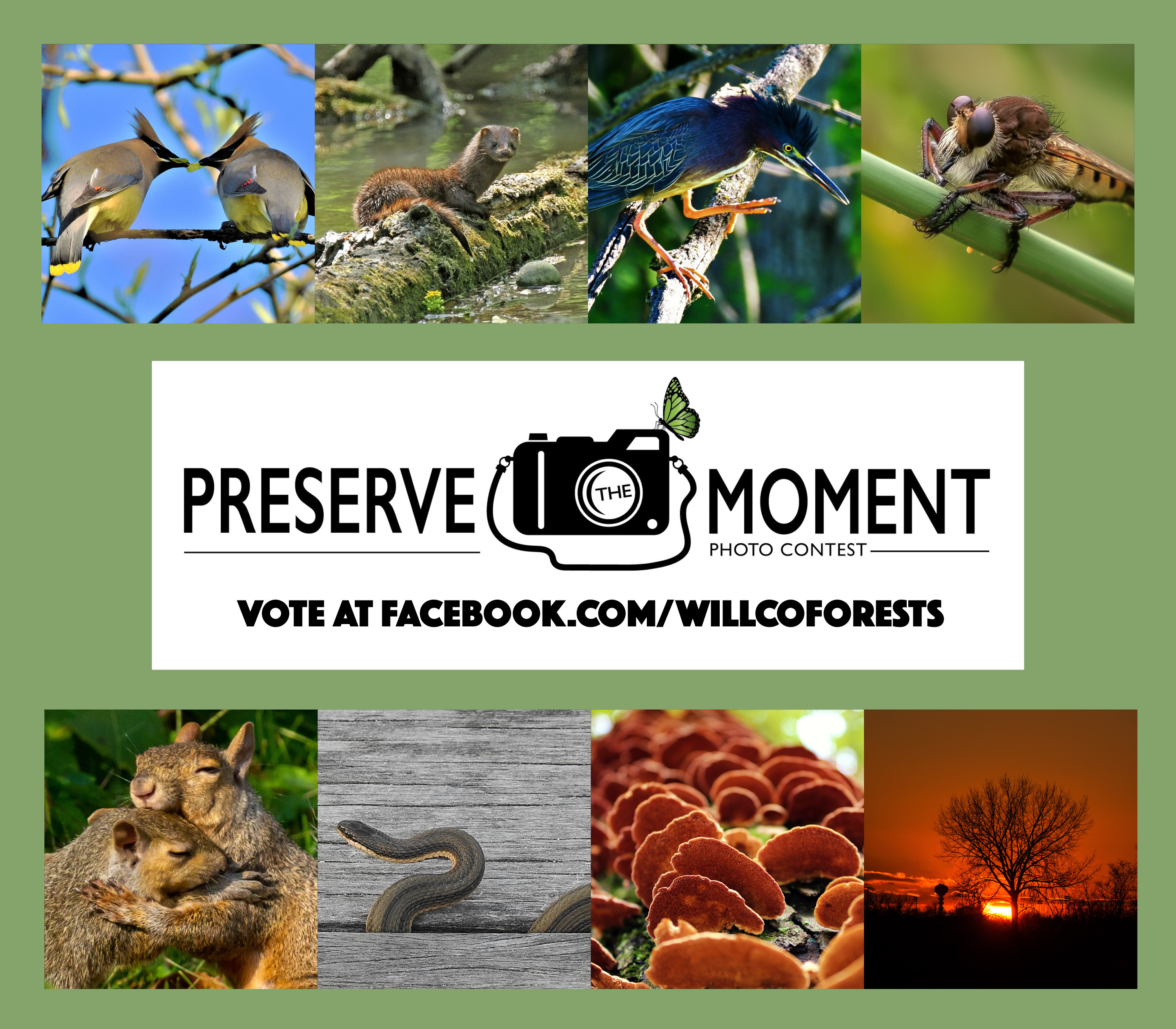 Photo for: You Can Pick the Winner in Our 2018 Preserve the Moment Photo Contest