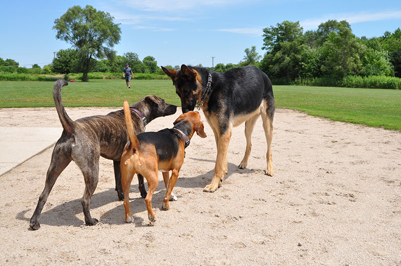 Photo for: Beyond the Rules: A Guide to Dog Park Etiquette
