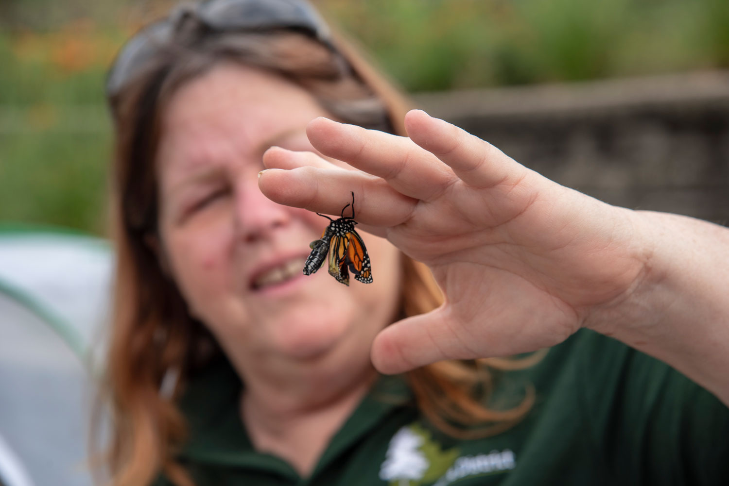 Photo for: For Barb Ferry, Raising Monarchs Is More Than a Hobby