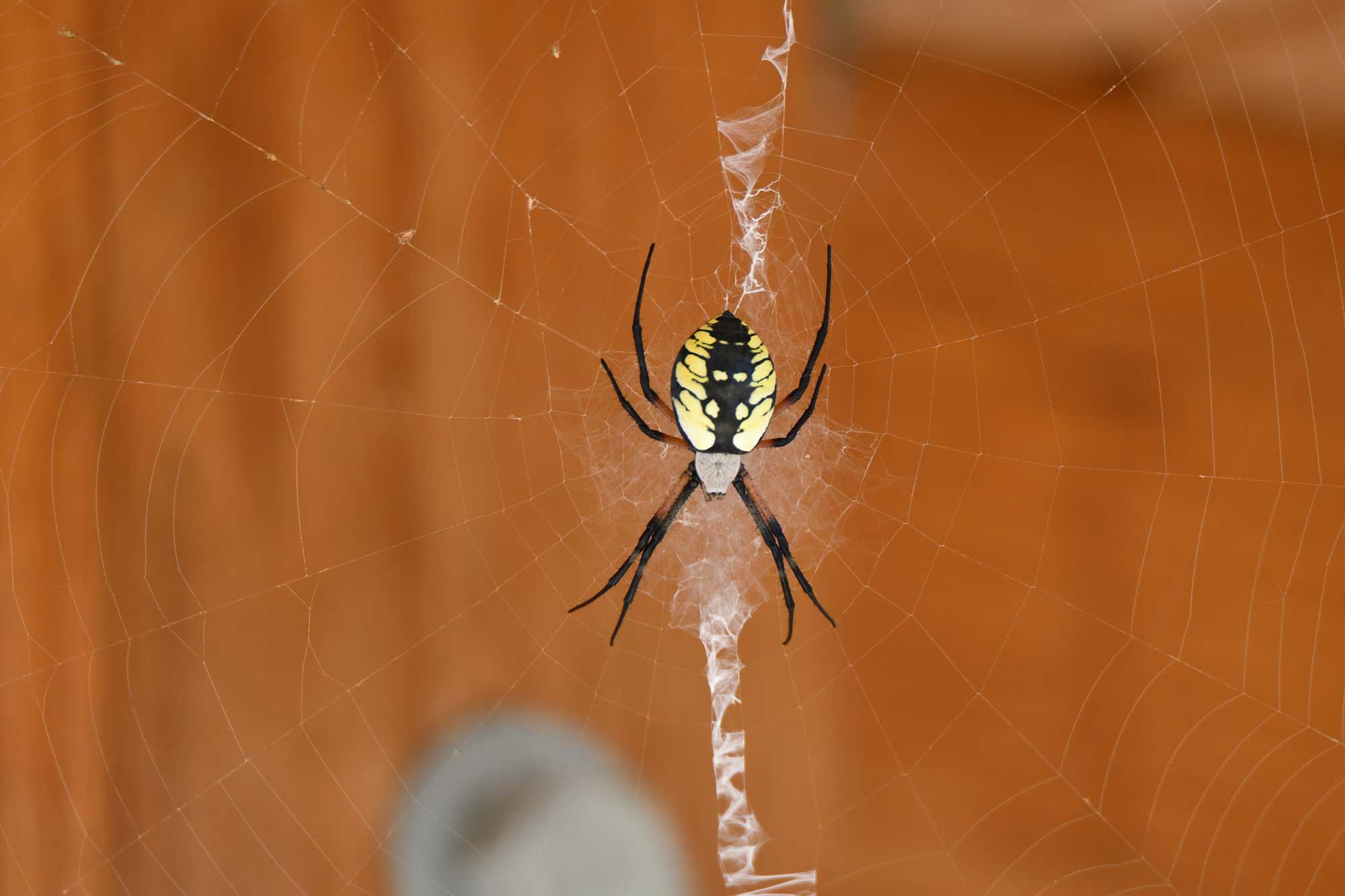 Spider Season has Arrived In a Big Way - Forest Preserve District of ...