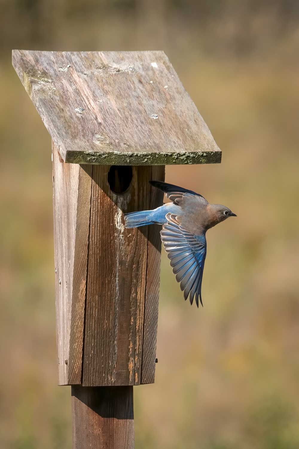 Photo for: Birdhouse bests competition in November portion of photo contest